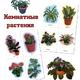 Дидактический материал на тему - Комнатные растения