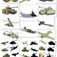 Дидактический материал и игра - Военная техника
