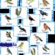 Демонстрационный материал. Зимующие птицы