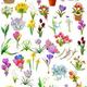 Клипарт Весенние цветы