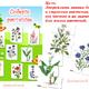 Дидактическая игра для детей - Собери растение