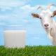 Козье молоко для грудничка: можно или нельзя?