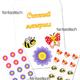Счетный материал для детей по математике Цветочки, бабочки и...