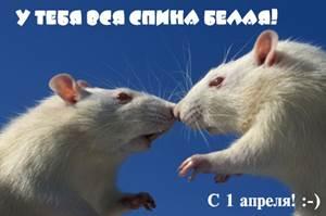 http://www.rastut-goda.ru/images/image/image1/53754315.jpg
