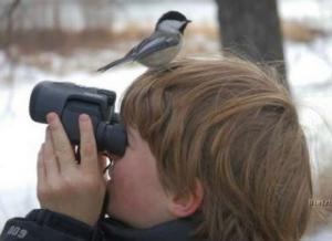 зимующие птицы, перелетные птицы, синица перелетная птица или нет, детям о птицах, дошкольникам о птицах