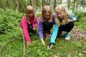 правила поведения в лесу для детей памятка, поведение в лесу