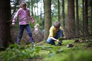 безопасное поведение в лесу, что делать если заблудился в лесу