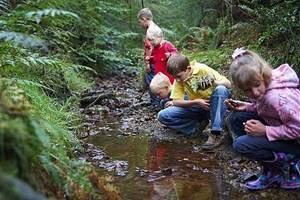 как вести себя в лесу, как нужно вести себя в лесу правила