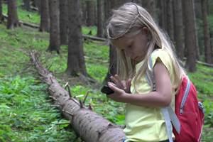 правила поведения в лесу для школьников