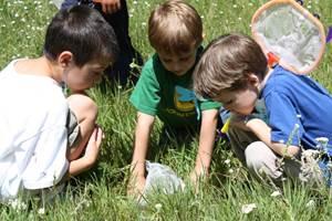 развлекательные мероприятия в летнем лагере, игры в лагере, интересные мероприятия для лагеря