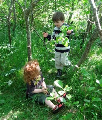 план на лето в детском саду, здоровье детей летом
