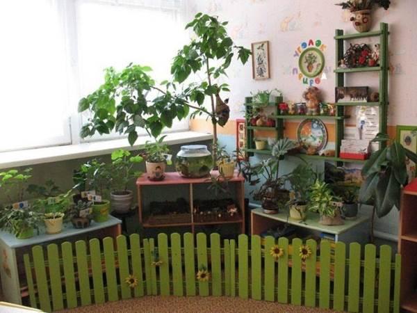 природный уголок в детском саду