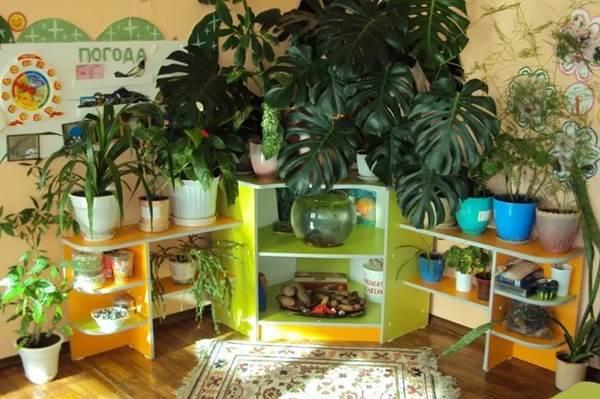 оформление уголка природы в детском саду