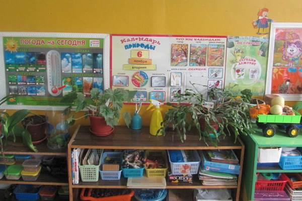 природный уголок в детском саду фото