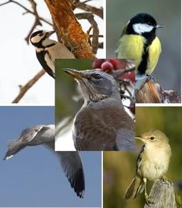 Подборка качественных фото птиц